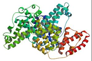 Bovine-Serum-Albumin-structure
