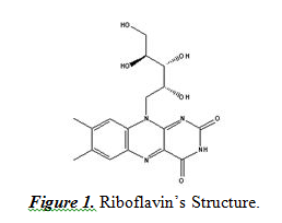 Riboflavin's Structure